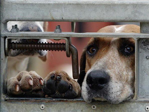 Dog Day Care Brigham City