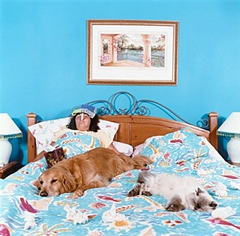 flu bed with dogs on bed
