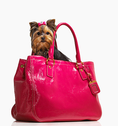 purse with dog