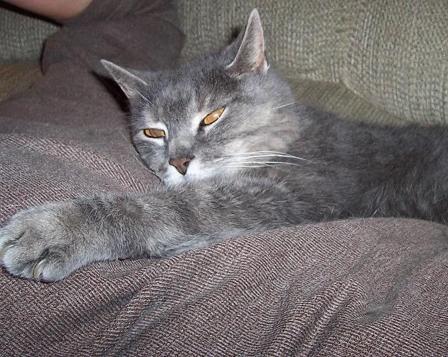 Fluffy (Heather's Cat)