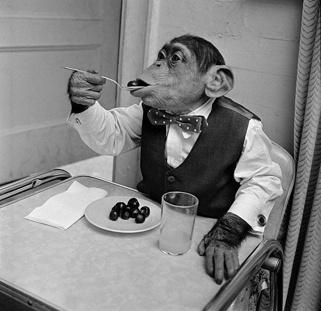 Cherry Chimp Eating (Getty)
