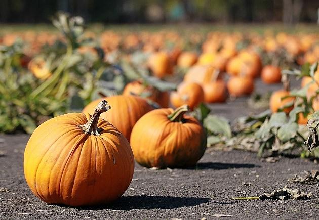 Pumpkin Patch (Getty)