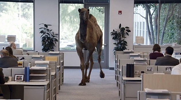 Geico Camel (YouTube)
