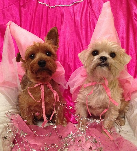 Sophie and Stella, Submitted by Jessica Nowak