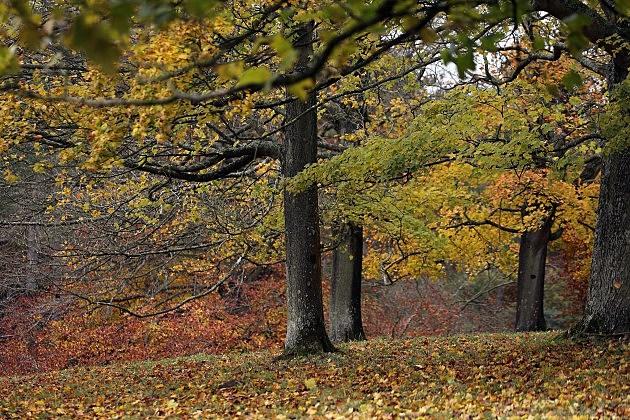 Fall Trees (Getty)