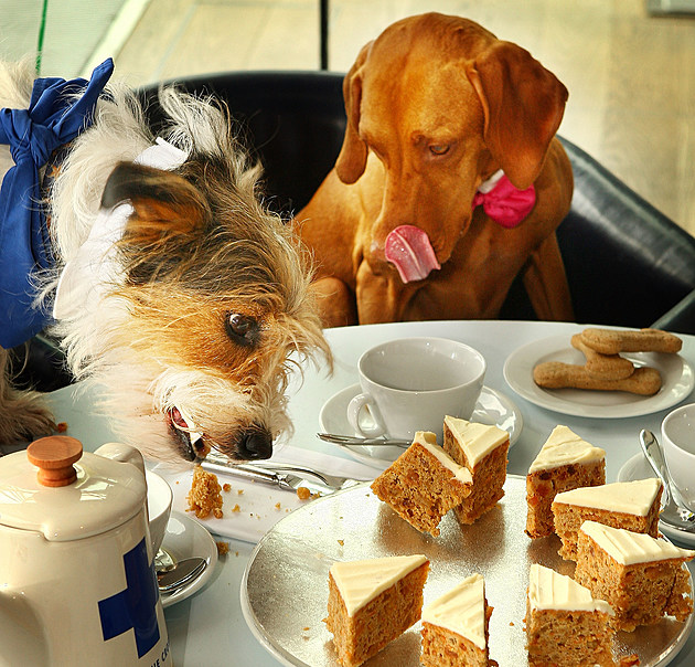 Dogs Attend Britain's Biggest Tea Party For Blue Cross Animal Charity